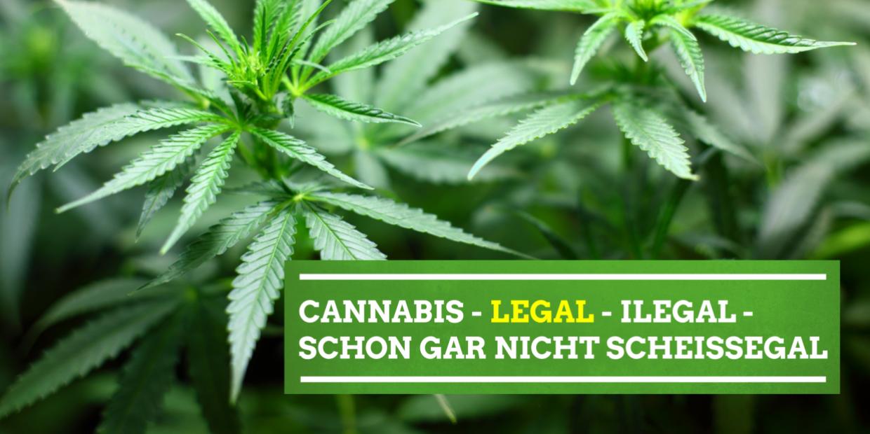 Cannabis - legal - illegal - schon gar nicht scheissegal