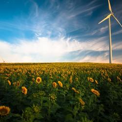Windkraft auf Sonnenblumenfeld