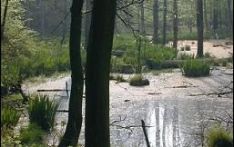 Natur-Wald, von Renate Stockfisch